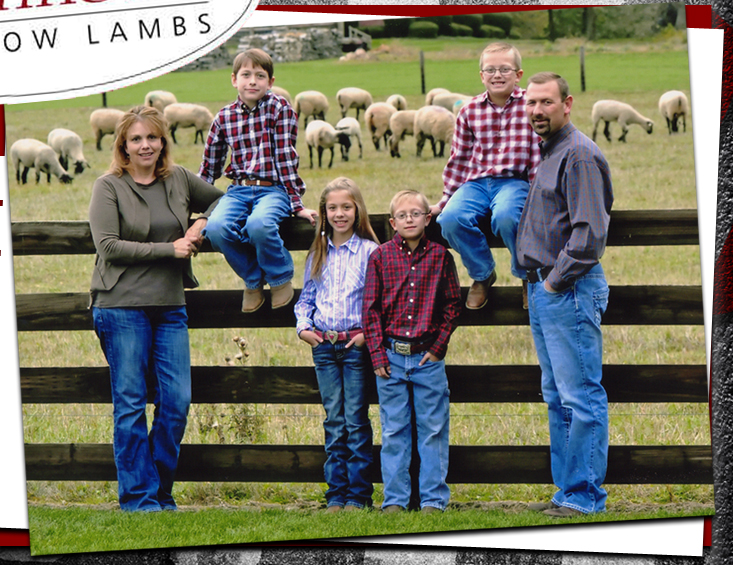 Lambs Lambs Shom