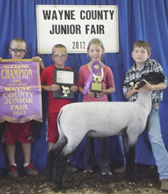 Johnson Show Lambs | Winners
